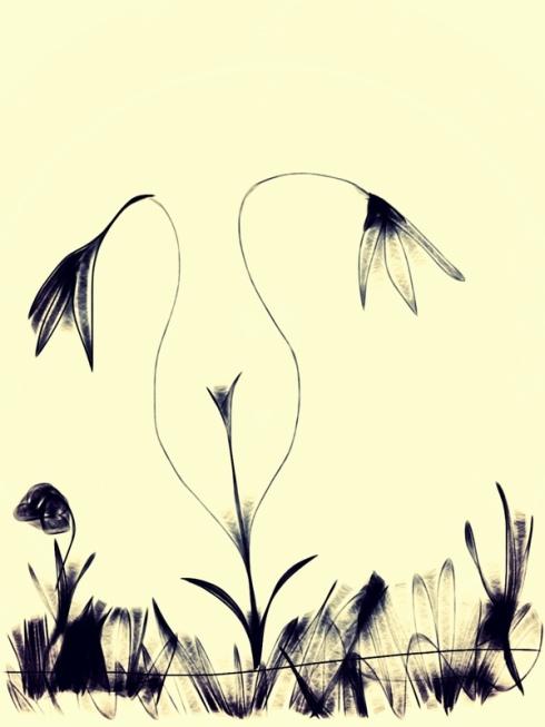 Floral Curves.JPG